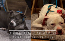 SCVTV's Community Corner Update: Molly and Spanky Still Looking to Get Adopted!