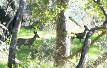Green Moment: Ojai Mountains