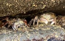 Ocean Moment: San Diego Sea Life