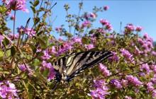 Butterfly Moment: Santa Barbra