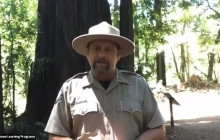 Henry Cowell Redwoods State Park, Secret of the Redwoods