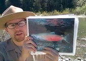 Salmon and their North Coast Redwoods Habitat with California State Parks
