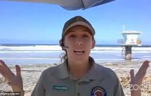 San Elijo State Beach, Jellyfish