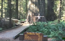 "Ancient Redwoods at California State Parks North Coast Redwoods, ""Luna and Me Storytime"""