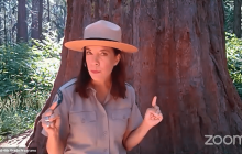 Calaveras Big Trees State Park – Sequoias!