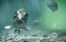 """Troubled Water"" (0:30 spot) | Green Santa Clarita"
