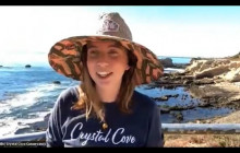 Monitoring Human Impacts at Crystal Cove State Park Marine Protected Areas