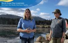 Monterey Bay Aquarium | We're Celebrating World Ocean Day!
